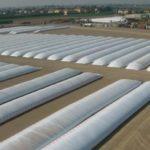 Компания «ПРОДО» на своей фабрике в Калуге освоила технологию хранения зерновых в открытом поле