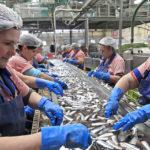 На Шикотане в июле откроется завод по переработке морепродуктов за 4 млрд рублей