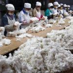 На Ставрополье будет построен завод по переработке хлопка за 12 млрд