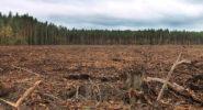 Новый законопроект грозит вырубкой лесов рядом с крупными городами